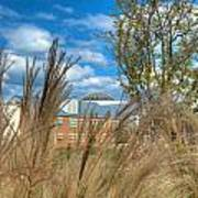 Founders Hall Through The Grasses Art Print
