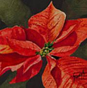 Franci's Poinsettia Art Print