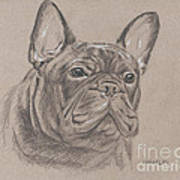 French Bulldog - Snickers Art Print