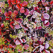 Frost On Autumn Tundra Art Print