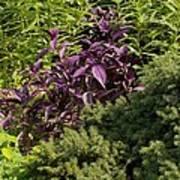 Garden Color At Woodward Park 8f Art Print