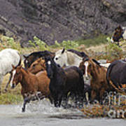 Gaucho With Herd Of Horses Art Print