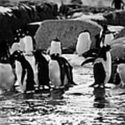 Gentoo Penguins On Rocky Shoreline On Port Lockroy Antarctica Art Print