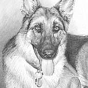 German Shepherd Pencil Portrait Art Print