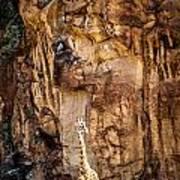 Giraffe Against The Rocks Color Art Print