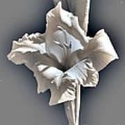 Gladiolus Named Nova Lux Art Print