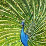 Glorious Peacock Art Print