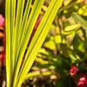 Glowing Iris Leaves 1 Art Print