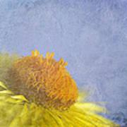 Golden Everlasting Daisy Art Print