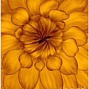 Golden Sunshine - Dahlia Art Print