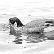Goose In The Water Art Print