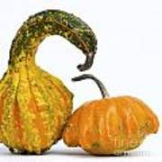 Gourds And Pumpkins Art Print