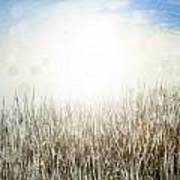 Grass And Sky  Art Print