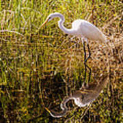 Great Egret  Art Print