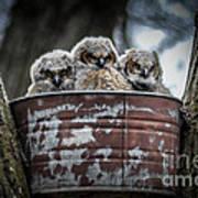 Great Horned Owl Chicks Art Print