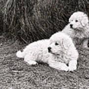 Great Pyramise Pups Art Print