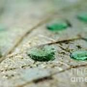Green Drops Art Print