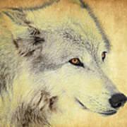 Grey Wolf Art Art Print