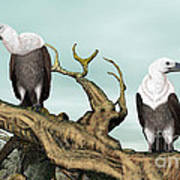 Griffon Vultures Art Print