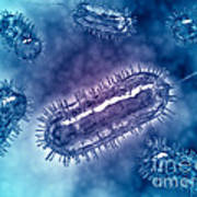 Group Of Escherichia Coli Bacteria Print by Stocktrek Images