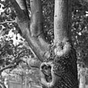 Growth On The Survivor Tree In Black And White Art Print
