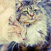 Gutter Kitties Seven Art Print