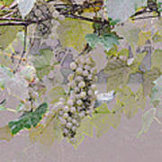 Hanging Thompson Grapes Sultana Art Print