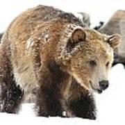 Happy Grizzly Bear Art Print