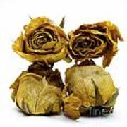 Heap Of Wilted Roses Art Print by Bernard Jaubert