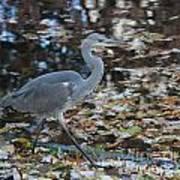 Heron On The River Art Print
