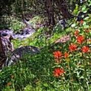 High Country Wildflowers 2 Art Print