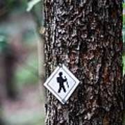 Hiking Trail Sign On The Forest Paths Art Print