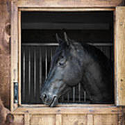 Horse In Stable Art Print by Elena Elisseeva