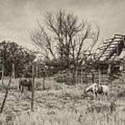 Horses And Barn Art Print