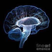 Human Brain Complexity Art Print