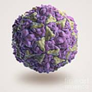Human Rhinovirus Art Print