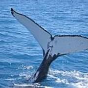 Humpback Whales Art Print