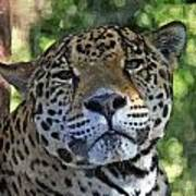 Jaguar 2 Art Print