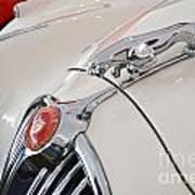 Jaguar Emblem Art Print
