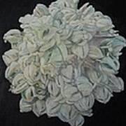 Joshua Tree Bloom Mandala Art Print