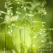 June Green Grass Flowering Art Print by Elena Elisseeva