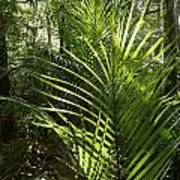 Jungle Ferns Art Print