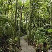 Jungle Trail Art Print