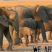 Kalahari Elephants Art Print