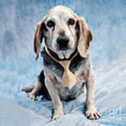 Kippy Beagle Senior Art Print