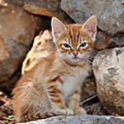 Kitten In Hydra Island Art Print