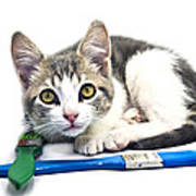 Kitten With Paint Brushes Art Print