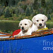 Labrador Retriever Puppies Art Print