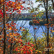 Lake And Fall Forest Art Print