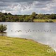 Lake  Geese And Trees Art Print